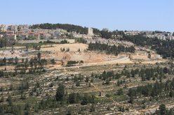 """تجريف أراضي قرية الولجة لبناء مئات الوحدات الاستعمارية في مستعمرة """"جيلو""""/ محافظة بيت لحم"""