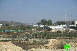 سرقة ثمار الزيتون من قبل المستعمرين على أراض قرية دير شرف بمحافظة نابلس