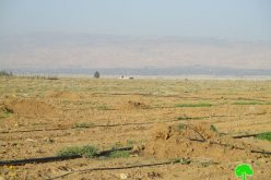 Israel Civil Administration uproot 400 palm trees and destroy irrigation networks in Jericho governorate