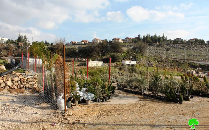 Israeli Occupation Forces notify seedlings nursery of stop-work in Hebron