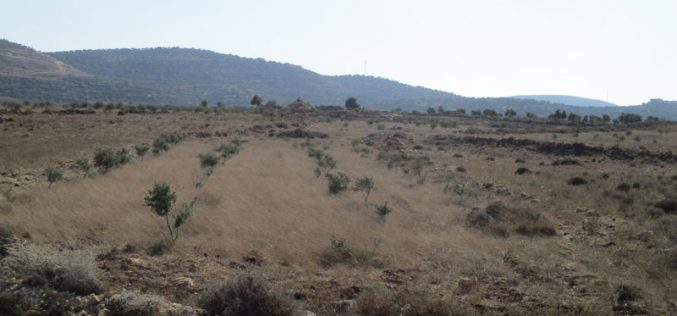 Israeli Authorities notify a farmland of evacuation in Qalqiliya governorate