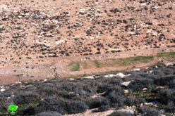 مستعمرون يستولون على أراضي شرق بلدة يطا محافظة الخليل