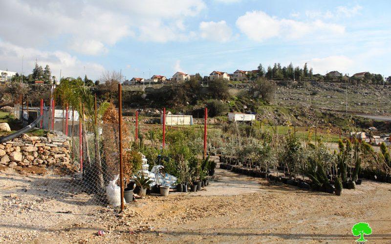 Israeli Occupation Forces notify seedlings nursery of stop-work in Hebron