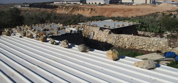 Final demolition order on Khirbat Abu al-Basal  in Salfit governorate