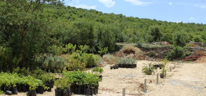 Israeli Occupation Forces demolish plants nursery in Beit Ummar town