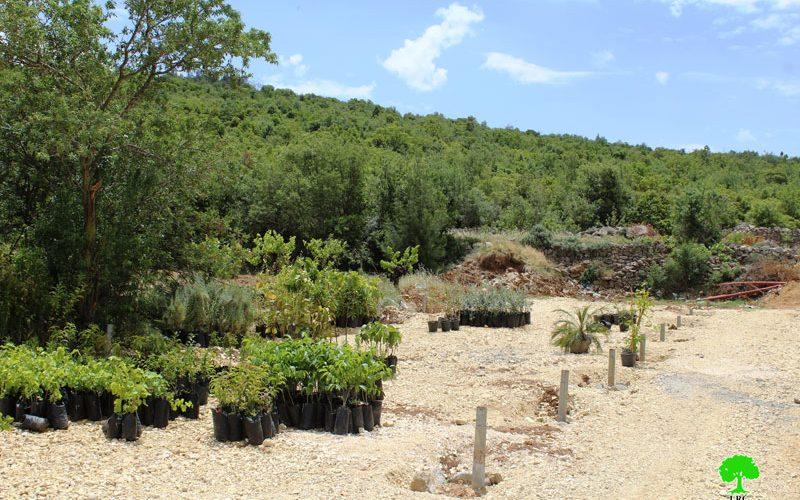 الاحتلال يهدم مشتل زراعي ويصادر محتوياته في بلدة بيت أمر شمال الخليل