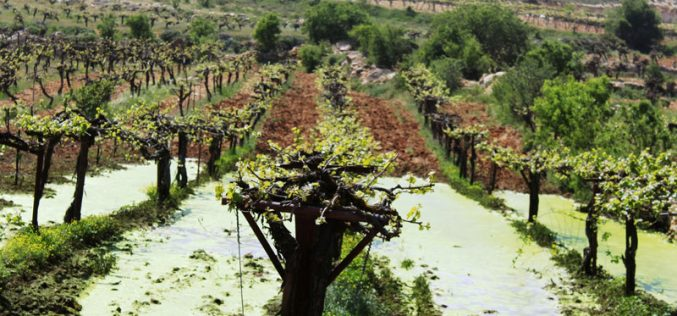Kfar Zion colonists pump sewage and wastewater into Beit Ummar agricultural lands