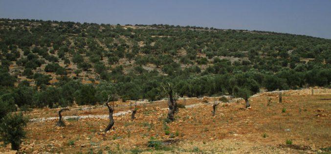 منع استصلاح ارض زراعية وتأهيل طريق زراعي في بلدة عزون محافظة قلقيلية