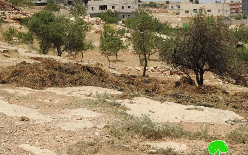 مستعمرون يحرقون بالات قش في قرية الديرات شرق يطا محافظة الخليل
