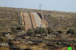 جيش الاحتلال يحرق 22 شجرة زيتون غرب بلدة الزاوية  محافظة سلفيت