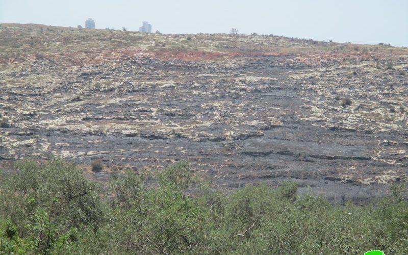 مستعمرون يحرقون 120 دونما من أراضي قرية صفا الزراعية محافظة رام الله