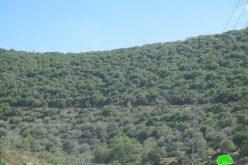 الاحتلال الاسرائيلي يواصل تهويد منطقة واد قانا شمال محافظة سلفيت