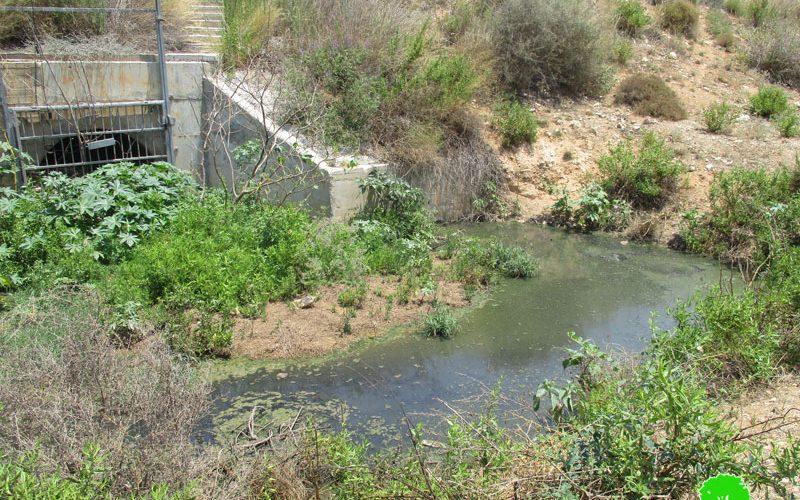 """مستعمرة """"ألفيه منشيه"""" تضخ مياهها العادمة باتجاه الأراضي الزراعية في قرية واد الرشا / محافظة قلقيلية"""