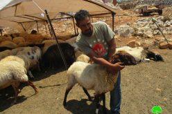 """مستعمرو """" ميغرون"""" يعتدون على راعي أغنام ويتسببون في نفوق 4 رؤوس في بلدة دير دبوان / محافظة رام الله"""