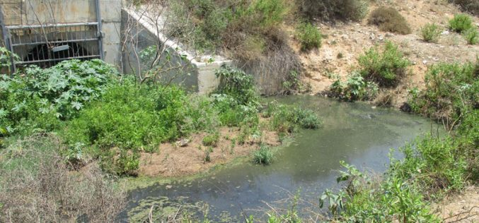 Sewage Water from the Settlement of Alfei Menashe Targets Palestinian Agricultural Lands