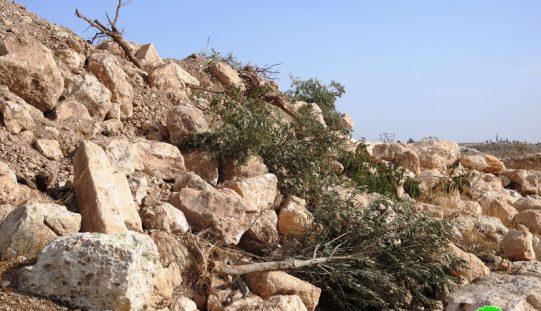 الاحتلال يجرف أراضٍ ويقتلع أشجار ويهدم آبار في خربة جمرورة غرب محافظة الخليل