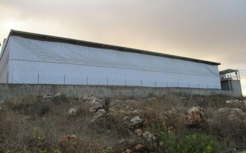 اقتلاع 80 شجرة زيتون على يد المستعمرين في قرية رأس كركر  محافظة رام الله