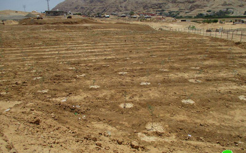 إخطارات بوجوب الإخلاء لمساحات من الأراضي الزراعية في منطقتي دير أبو حجلة والنويعمة / محافظة أريحا