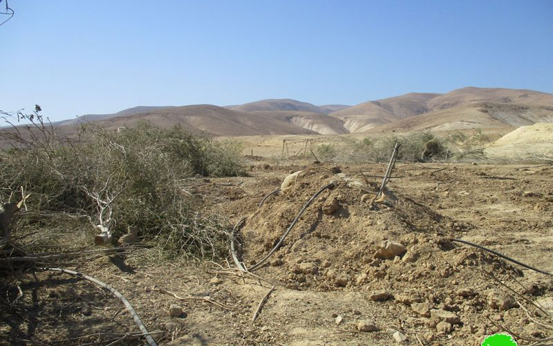 تجريف أراضي واقتلاع أشجار زيتون في قرية فصايل الوسطى / محافظة أريحا