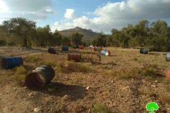Settlers uproot 80 olive trees in Ras Karkar Ramallah