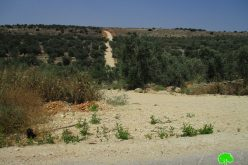 Israel's Occupation Forces halt rehabilitation works on agricultural land and road in 'Azzun-Qalqilya governorate