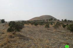 بحجة الاعتداء على الآثار إخطار بإخلاء 16 دونماً مزروعة بالزيتون في خربة ابزيق / محافظة طوباس