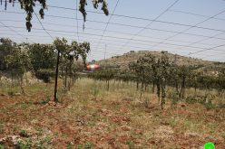 """مستعمرون يعدمون 700 شجرة عنب بمنطقة """" بلوطة عويس"""" جنوب الخليل"""