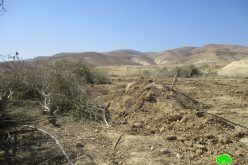 Lands ravaging and trees uprooting in The Jericho village of Fasyel