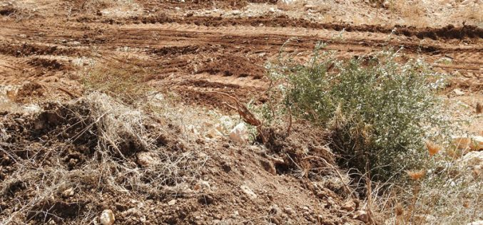 Israeli Occupation Forces ravage agricultural lands in Beit Ula town / West Hebron