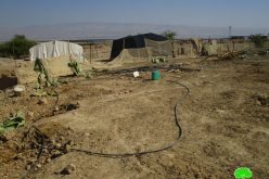 Lands ravaging and trees uprooting in The Jericho village of Fasayil