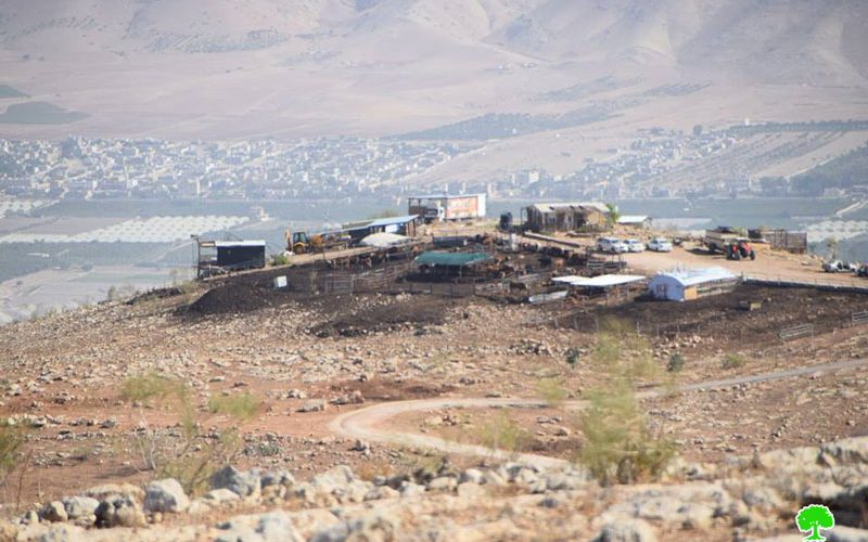 Settlers take over tens of agricultural dunums from As-Suwaid a and Al-Mozokah / Tubas governorate