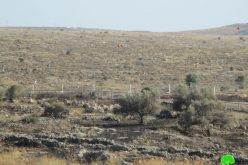 Israeli Troops Torch 22 Olive Trees – Az Zawiya / Salfit Governorate