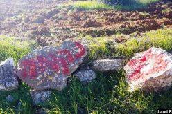 """مستعمرون يقطعون 15 شجرة زيتون في """"الحمرا"""" شرق يطا / محافظة الخليل"""