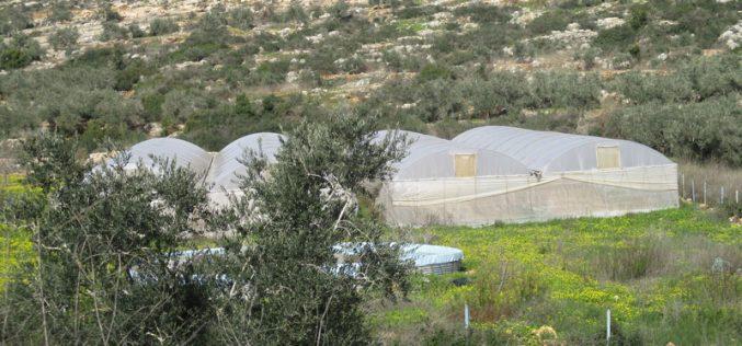 إخطار بوقف العمل في مزرعة من الزراعات المحمية في قرية عزون عتمة شرق قلقيلية