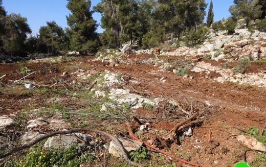 تجريف أراضي واقتلاع أشجار في جبل أبو سودا شرق بيت أمر / محافظة الخليل