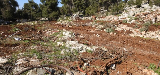 Ravaging lands and uprooting trees in Jabal Abu Soda East Beit Ummar/ Hebron governorate