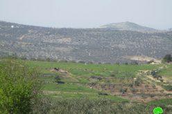 مستعمرون يقتلعون 145 غرسة زيتون من أراضي قرية جيت / محافظة قلقيلية