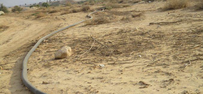 اقتلاع 125 غرسة نخيل وتدمير خطوط مائية في منطقة دير أبو حجلة والزور / محافظة أريحا