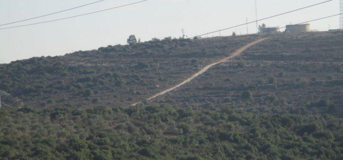 قلع عشرات أشجار الزيتون للشروع بشق طريق استعماري على حساب الأراضي الزراعية في قرية جينصافوط / محافظة قلقيلية