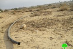 Uprooting 125 palm plants and destroying water lines / Jericho