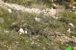 الاحتلال يقطع 200 شجرة زيتون في قرية صافا ببلدة بيت أمر / محافظة الخليل