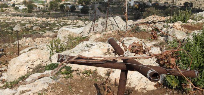 مستعمرون يعتدون على أراضي مواطن قرب ترقوميا للمرة الثانية خلال شهر / محافظة الخليل