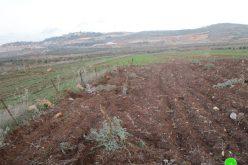 قطع وتخريب 60 غرسة زيتون في بلدة ترمسعيا / محافظة رام الله