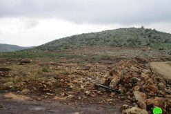 The Israeli occupation troops uprooted 155 olive saplings in Barta'a Ash-Sharqiya/ Jenin governorate