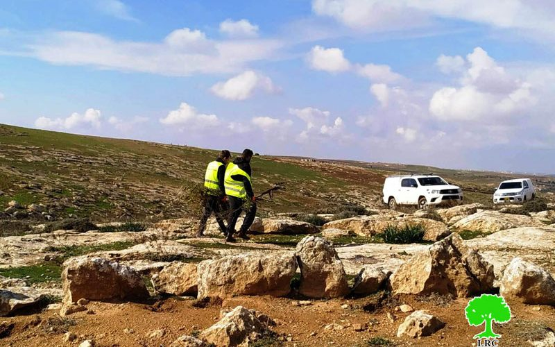 The Israeli occupation ravages lands and uproots trees in Al-Mufqara and Ar-Rakeez –East Yatta
