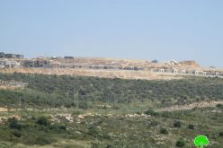 """Bruchin"" settlement goes under expansion / Salfit governorate"