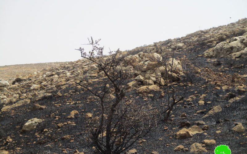 مستعمرون متطرفون يحرقون 75دونماً من الأراضي الزراعية والرعوية في قرية المغير / محافظة رام الله
