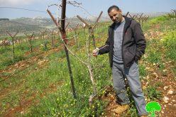 """مستعمرو """" كوخاف هشهاير"""" يعتدون على الأراضي الزراعية في قرية دير جرير / محافظة رام الله"""