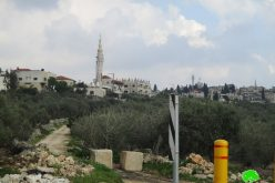 The Israeli occupation seals off an agricultural road in Deir Istiya / Salfit governorate