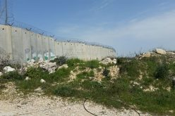Monitoring Report on the Israeli Settlement Activities in the occupied State of Palestine – February 2019